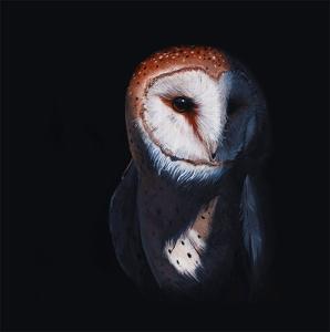 owl contrast